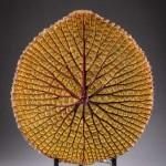Leaf 3D scan