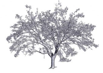 tree 3d scanning services
